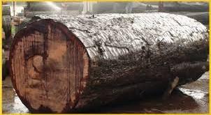 چوب و ساختار چوب www.bestchoob.ir بست چوب
