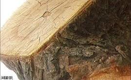 چوب سخت یا سخت چوب ها