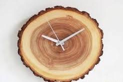 چوب نرم یا نرم چوب ها
