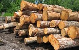 تعريف چوب از منظر گياه شناسي
