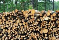 چوب و اشکال گوناگون چوب از نظر مصرف